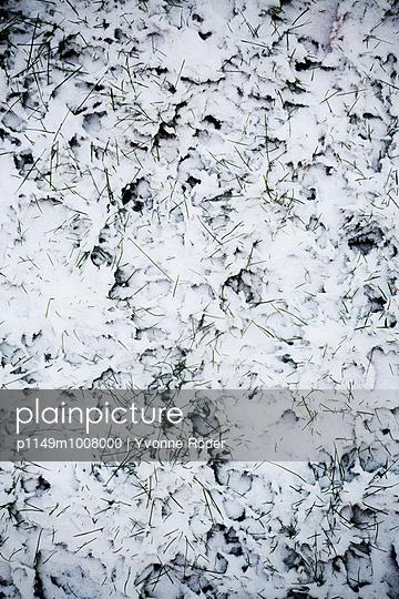Gras mit Schnee - p1149m1008000 von Yvonne Röder
