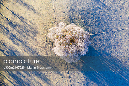 Germany, Bavaria, Schwaigwall, Aerial view of white birch tree in winter - p300m2167528 by Martin Siepmann