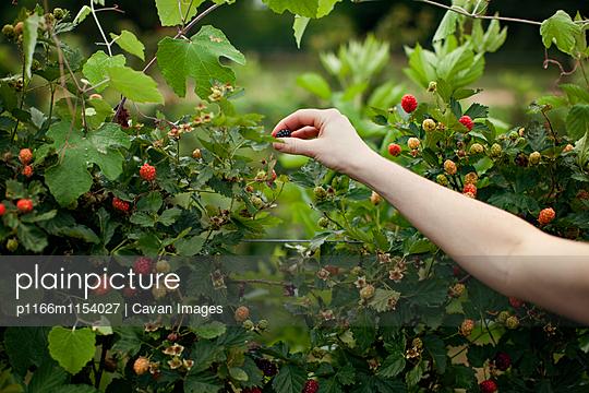 p1166m1154027 von Cavan Images