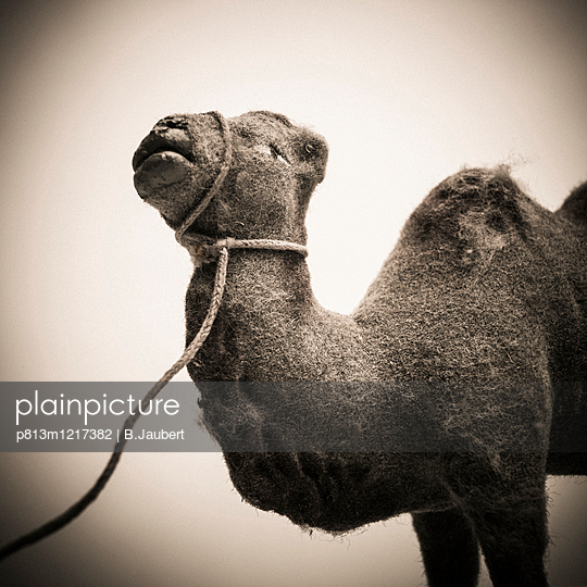 Toy camel - p813m1217382 by B.Jaubert
