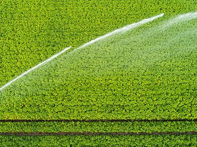 Künstliche Bewässerung im Kartoffelanbau - p1079m2157729 von Ulrich Mertens