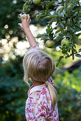 Back view of girl picking apple from tree - p300m2114477 by Jana Fernow