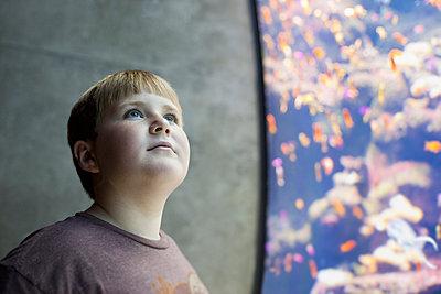 Serious boy visiting aquarium - p555m1479978 by Sollina Images