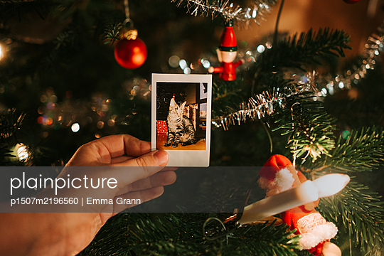 Polaroid of cat at the Christmas tree - p1507m2196560 by Emma Grann