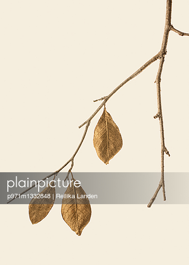 Golden leaves - p971m1332848 by Reilika Landen