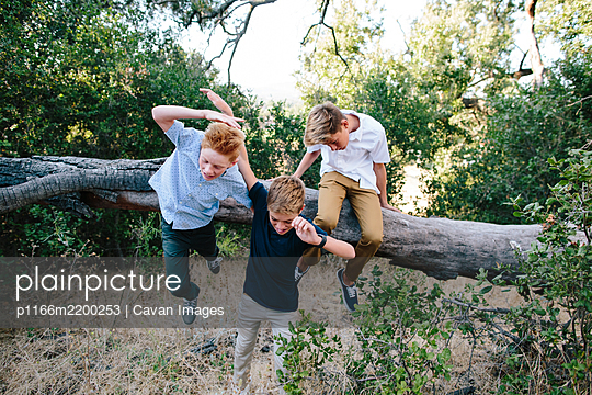Two Boys Take A Fall Off Of A Large Branch While A Third Stays Put - p1166m2200253 by Cavan Images