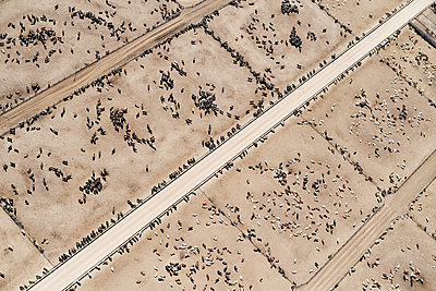 USA, Aerial photograph of Beef Cattle feed lot near Greeley, Colorado - p300m2023881 by Cameron Davidson