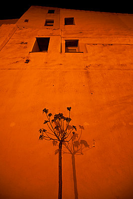 Plant in front of a building at night bathed in yellow light - p3313630 by Andrea Alborno