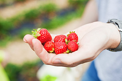 Hand holding strawberries - p699m2007798 by Sonja Speck