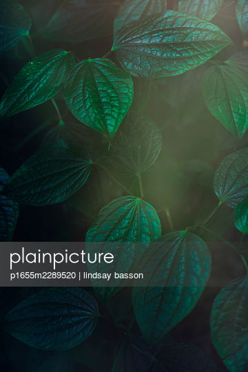 Beautiful Green Leaves - p1655m2289520 by lindsay basson