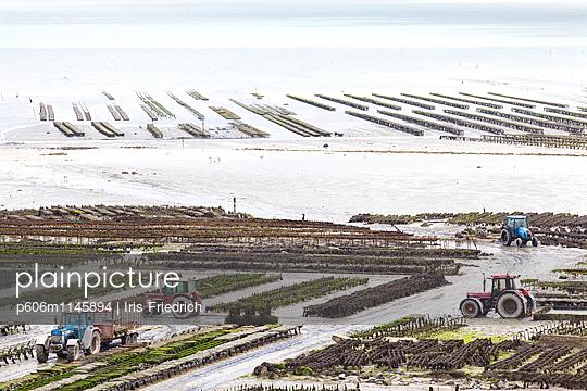 Austernzucht, Cancale - p606m1145894 von Iris Friedrich