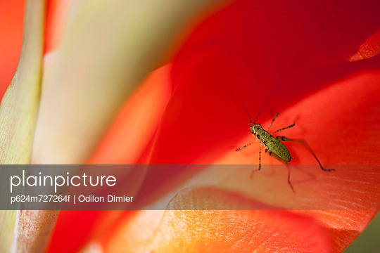 Insect on flower petal