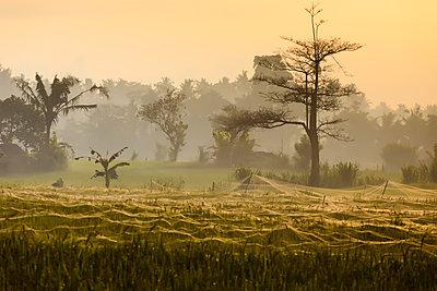 Rice fields,Bali,Indonesia - p343m1578170 by Konstantin Trubavin