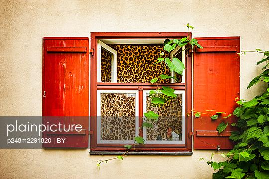 Rotes Fenster mit einem Vorhang aus Leopardenmuster - p248m2291820 von BY