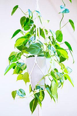 Hanging plant - p1149m2183744 by Yvonne Röder