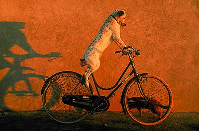 Cycle - p1205m1112254 by Toni Anzenberger