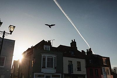 Bird in flight - p1477m2038936 by rainandsalt