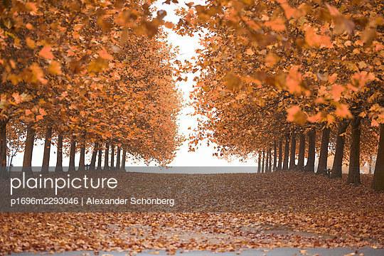 Avenue in autumn - p1696m2293046 by Alexander Schönberg