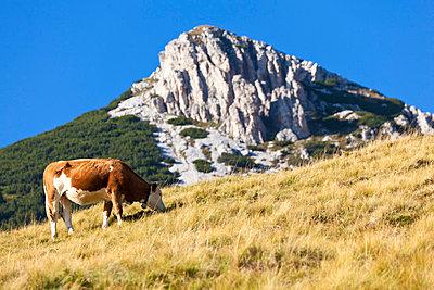 Alpen - p4880509 von Bias