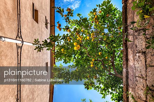 Zitronenbaum in der Altstadt, Sorrent, Halbinsel von Sorrent, Kampanien, Italien - p1316m1160782 von Sabine Lubenow