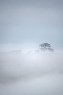 Farmhouses and barn in the fog - p1302m1541639 by Richard Nixon