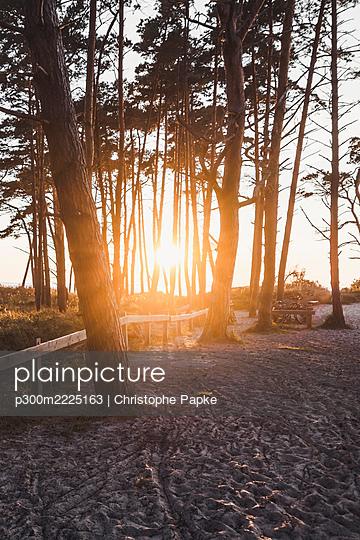 Setting sun shining between trees growing along sandy beach - p300m2225163 by Christophe Papke