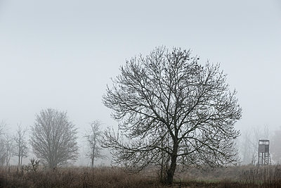 Fog in the countryside - p739m1191021 by Baertels