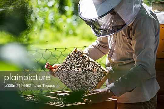Beekeeper checking honeycomb with honeybees - p300m2114463 von Jan Tepass