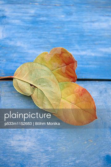 Vertrocknete Blätter - p533m1152683 von Böhm Monika