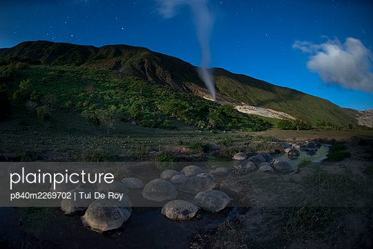 Alcedo giant tortoise (Chelonoidis vandenburghi) group resting in evening. Steam venting from fumarole in background, Alcedo Volcano, Isabela Island, Galapagos. 2017. - p840m2269702 by Tui De Roy