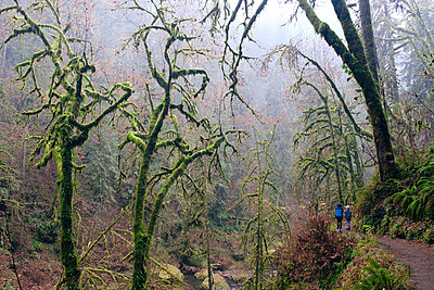 Silver Creek Falls State Park - p1262m1223008 by Maryanne Gobble