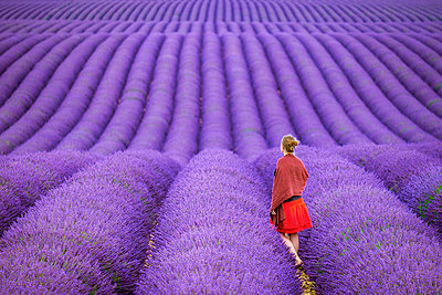 A young woman standing alone between rows of purple lavender in bloom in a field on the Plateau de Valensole - p1166m2136845 by Cavan Images