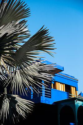 Marrakesh, Majorelle Gardens, Blue house - p1253m2152612 by Joseph Fox