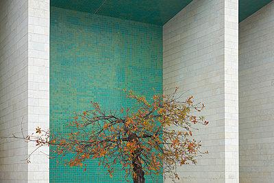 Gebäude Baum alt - p1312m1223664 von Axel Killian