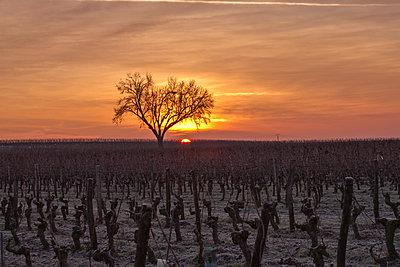 Poyeux Sunrise - p1402m2063453 by Jerome Paressant