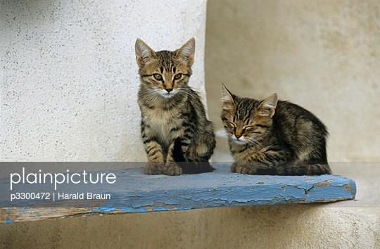 Katzen auf Santorini - p3300472 von Harald Braun