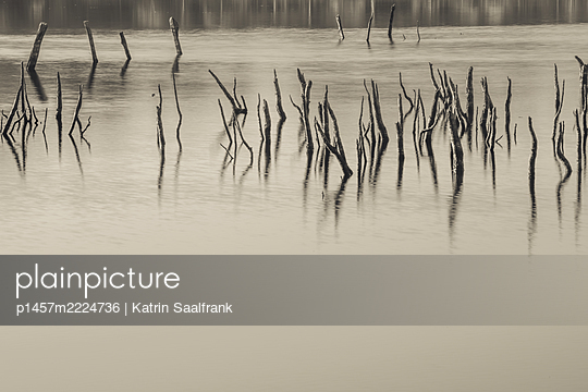 p1457m2224736 by Katrin Saalfrank