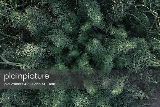 Grün - p212m889942 von Edith M. Balk
