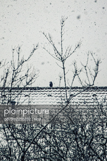 Single bird on snow covered roof - p879m2295232 by nico