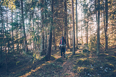 Sweden, Sodermanland, backpacker hiking in remote forest in backlight - p300m2004688 by Gustafsson