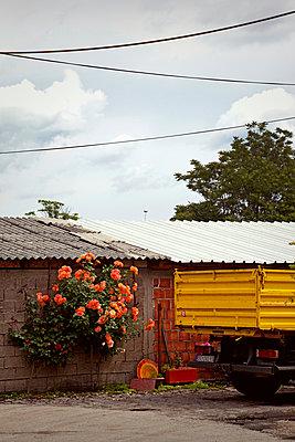 Rosen und Lastwagen  - p382m1218835 von Anna Matzen