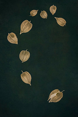 Computer generated abstract pattern of physalis seed heads with fruit on dark green background - p1047m2290878 by Sally Mundy