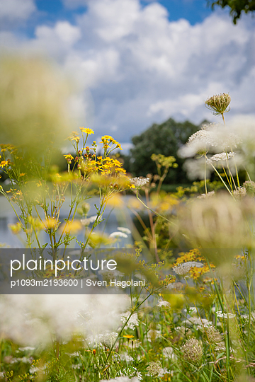 Wiese mit Wildblumen und Kräutern - p1093m2193600 von Sven Hagolani
