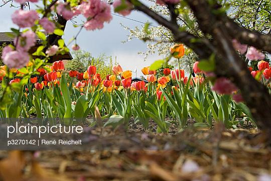 Flowerbed - p3270142 by René Reichelt