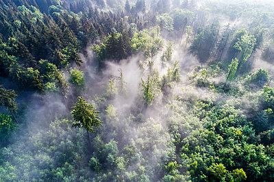 Germany, Baden-Wuerttemberg, Swabian Alb, Aerial view of Schurwald, morning fog - p300m2004757 by Stefan Schurr