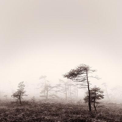 Nebelmoor - p992m1093035 von Carmen Spitznagel