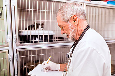 Senior vet filling in documents at cage with cats - p300m1470088 by HalfPoint