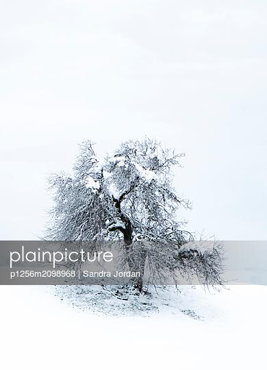 Alone - p1256m2098968 by Sandra Jordan