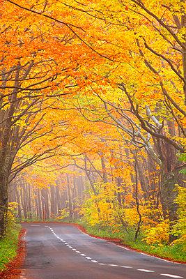 Autumn colors, Aomori Prefecture, Japan - p307m974263f by Mamoru Muto