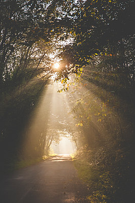Light effects - p1402m2065642 by Jerome Paressant
